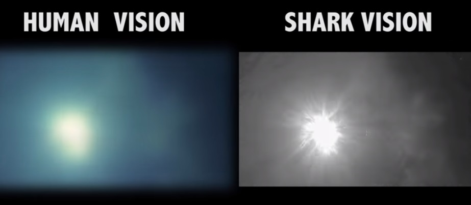رؤية سمك القرش