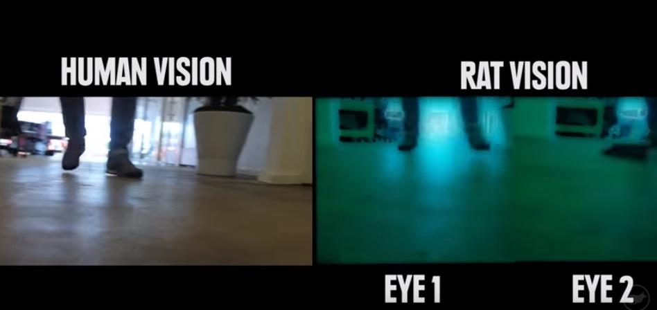 رؤية الفأر وعمل كل عين بشكل منفصل