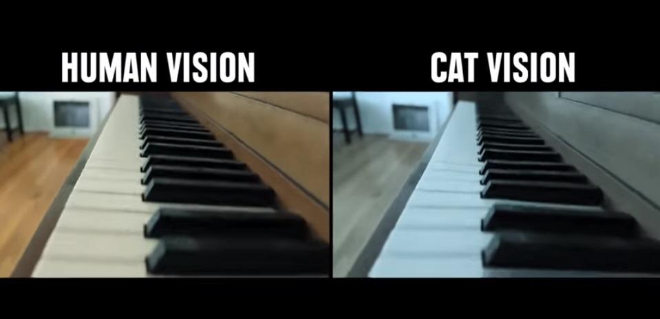 رؤية القطة