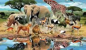 خلق الحيوان