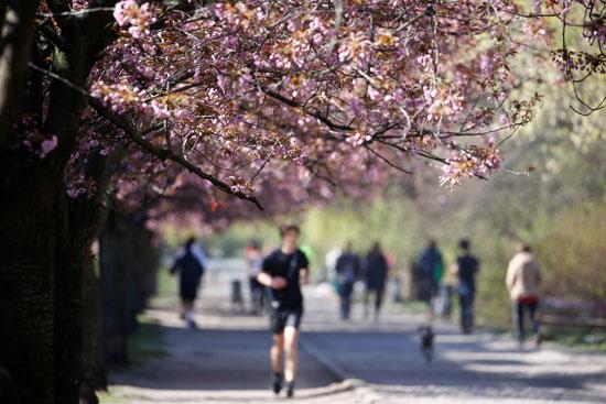 حديقة-في-منطقة-تريبتو-في-برلين