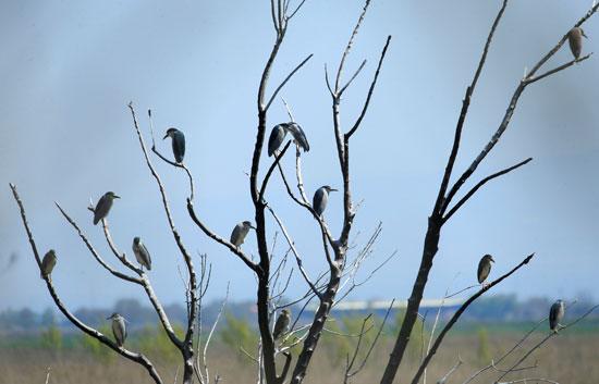 الطيور على أغصان الشجر