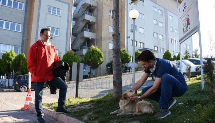 121-105648-loyalty-dog-turkey_700x400
