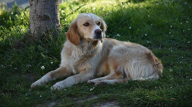 121-105648-loyalty-dog-turkey-2