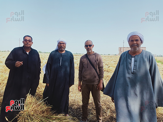 3311446-اثناء-الحصاد