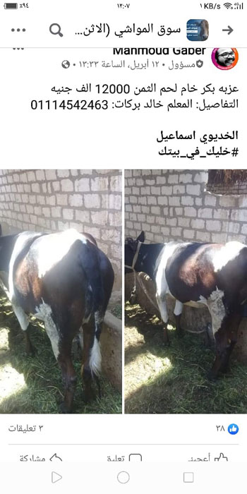حمله اللحوم (3)