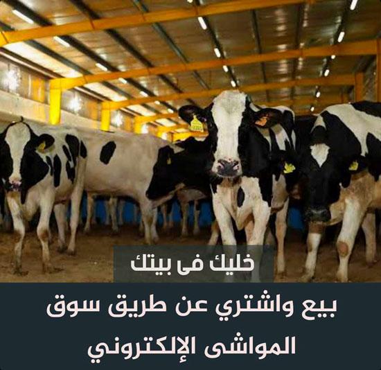 حمله اللحوم (2)