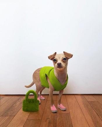الكلب Boobie Billie