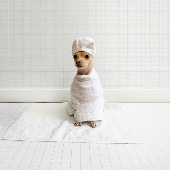 Boobie Billie بعد الاستحمام