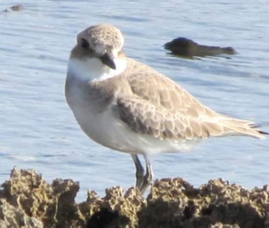الطيور البحرية تنتشر على شواطئ البحر الأحمر  (2)