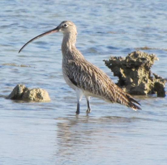 الطيور البحرية تنتشر على شواطئ البحر الأحمر  (3)