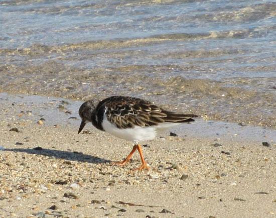 الطيور البحرية تنتشر على شواطئ البحر الأحمر  (4)