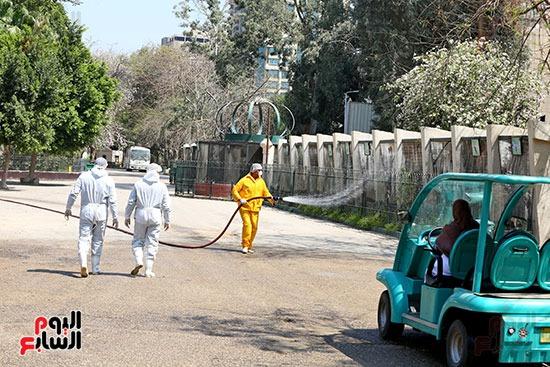 اعمال  تطهير  بحديقة حيوان الجيزة  ضد كورونا  (2)
