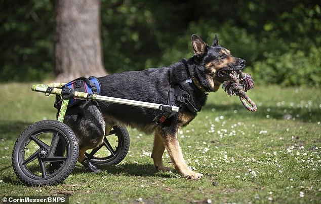 الكلب  (3)