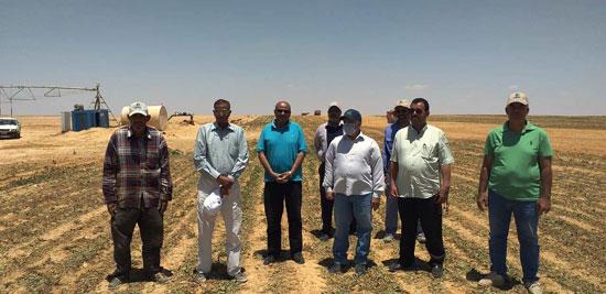 520201316276897-مركز-البحوث-الزراعية--يتابع--حصاد-البنجر-بمشروع-المنيا--(4)