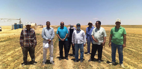 520201316276897-مركز-البحوث-الزراعية--يتابع--حصاد-البنجر-بمشروع-المنيا--(2)
