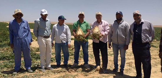 520201316276897-مركز-البحوث-الزراعية--يتابع--حصاد-البنجر-بمشروع-المنيا--(1)