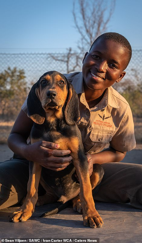 28426918-8322921-Pictured_dog_handler_Precious_Malapane_with_a_puppy_in_training_-m-8_1589545102652
