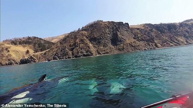 الحيتان تحول حول شابين من راكبى الزوراق  (1)