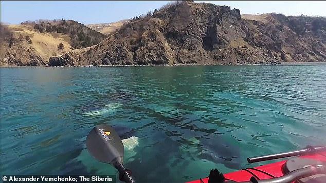 الحيتان تحول حول شابين من راكبى الزوراق  (4)