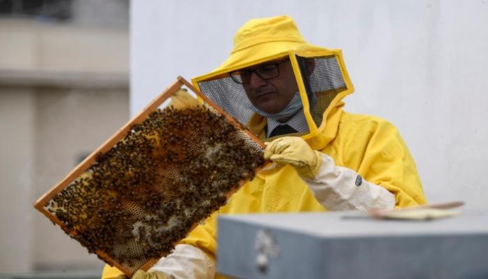 النحل في روما