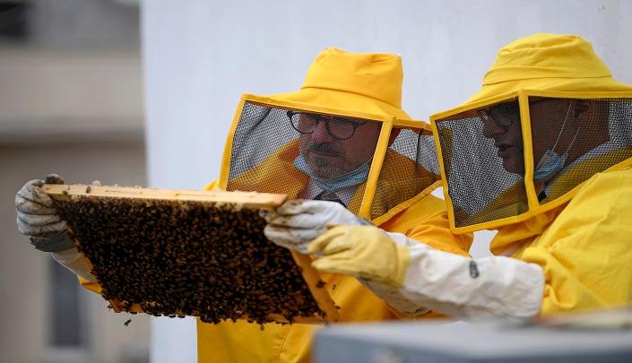 خلايا النحل في روما