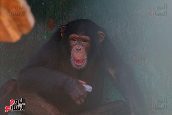 مكعبات ثلج لقرود (4)