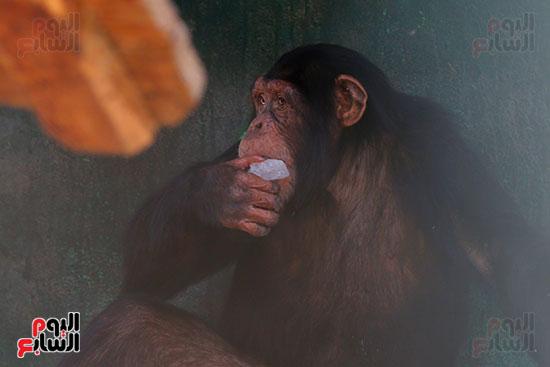 مكعبات ثلج لقرود (5)