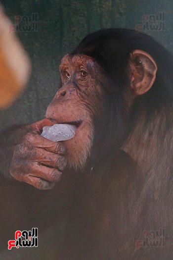 مكعبات ثلج لقرود (1)