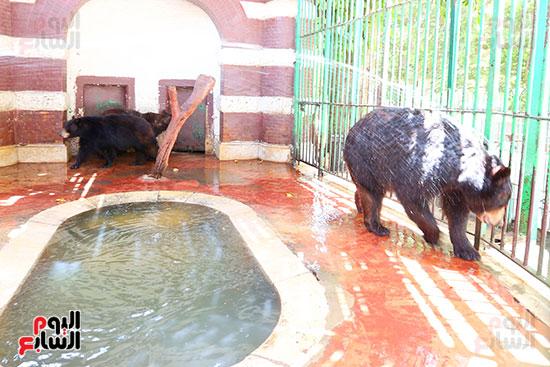 حمام بارد لمواجهة موجة الحر الشديد (1)