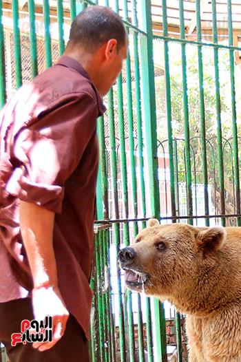 حارس الدب الروسى يقدم لة الطعام (5)