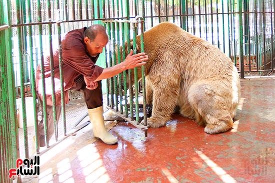 حارس الدب الروسى يقدم لة الطعام (2)