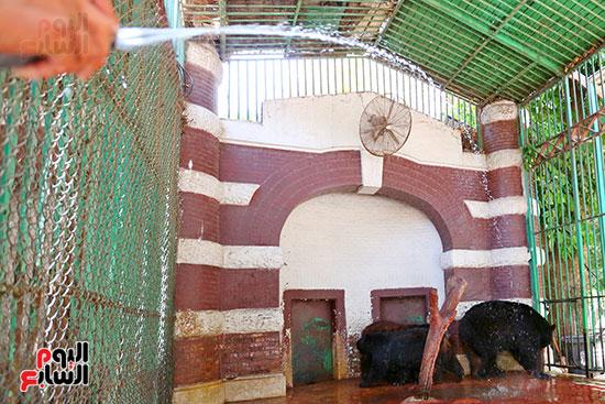 حمام بارد لمواجهة موجة الحر الشديد (3)