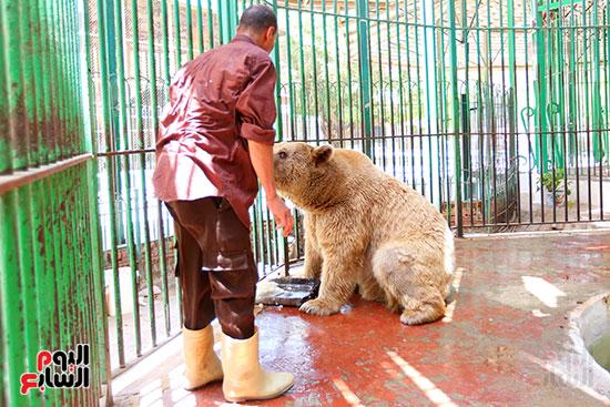 حارس الدب الروسى يقدم لة الطعام (3)