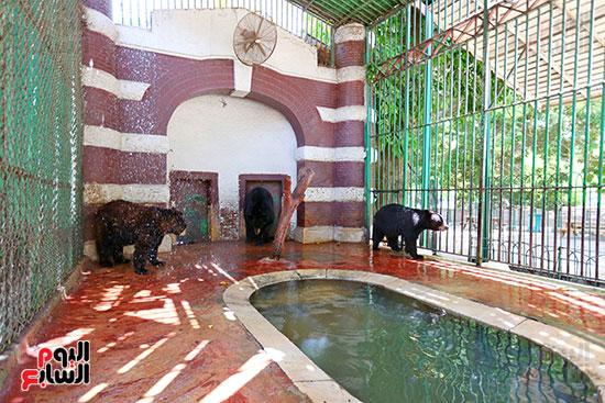 حمام بارد لمواجهة موجة الحر الشديد (2)