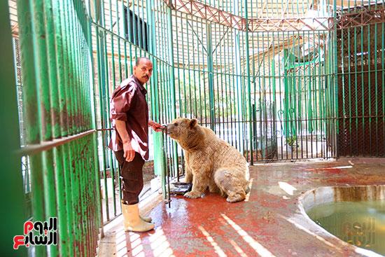 حارس الدب الروسى يقدم لة الطعام (1)