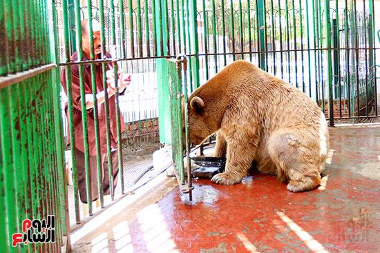 الدب الروسى (3)