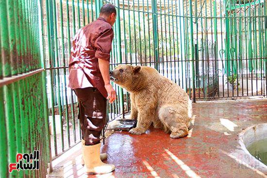 حارس الدب الروسى يقدم لة الطعام (4)