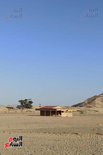 هنا هيبا وادى العزلة والنقاء فى الصحراء الشرقية (2)
