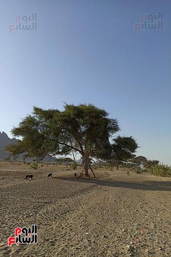 هنا هيبا وادى العزلة والنقاء فى الصحراء الشرقية (3)