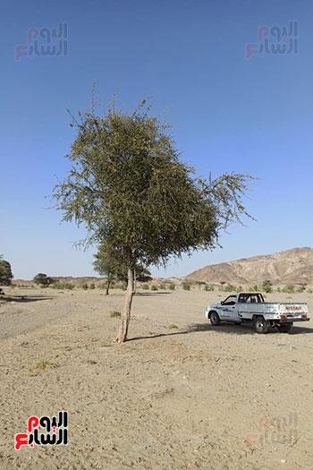 هنا هيبا وادى العزلة والنقاء فى الصحراء الشرقية (4)