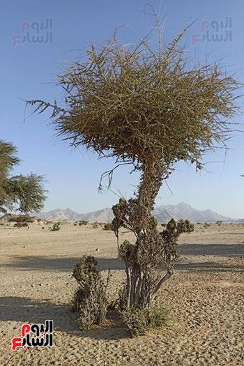 هنا هيبا وادى العزلة والنقاء فى الصحراء الشرقية (5)