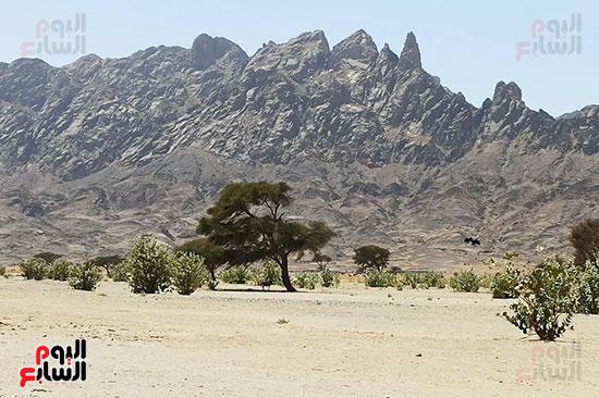 هنا هيبا وادى العزلة والنقاء فى الصحراء الشرقية (1)