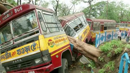 حافلة تضررت من شجرة متساقطة بسبب إعصار أمفان