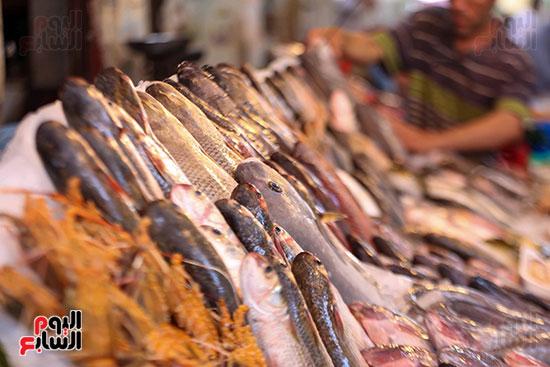 انواع السمك (5)
