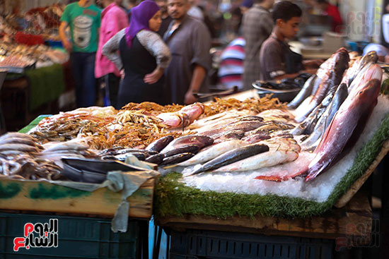 انواع السمك (7)