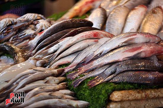 حلقة السمك  (3)