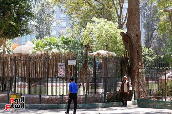 كيف تأثرت حيونات حديقة الجيزة بغياب الجمهور (6)