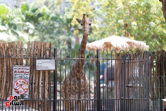كيف تأثرت حيونات حديقة الجيزة بغياب الجمهور (9)
