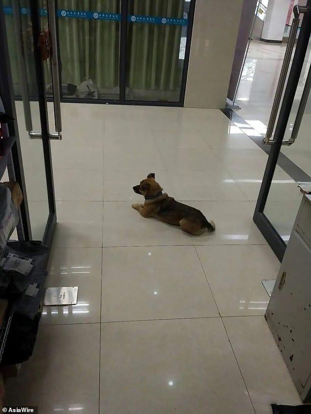 كلب (2)
